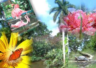 20100606013250-flora-y-fauna.jpg