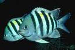 20101012133020-peces.jpg