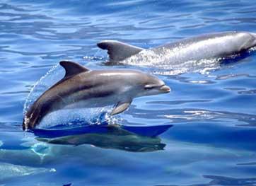 20101101132606-delfines-web.jpg