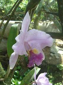 20101122123512-orquidea.jpg