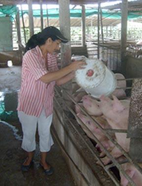 20110308131747-cerdos.jpg