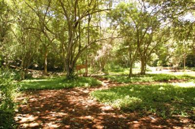 20110526141501-bosques.jpg