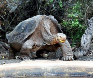 20120707110312-tortuga-diego.jpg