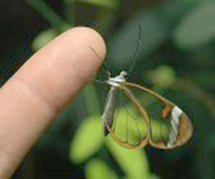 20120712115122-mariposa.jpg