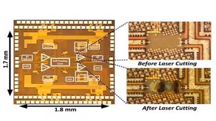 20130314072631-chip.jpg