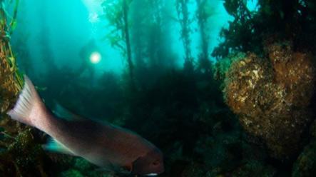 20130717142233-bosque-marino-580x325.jpg