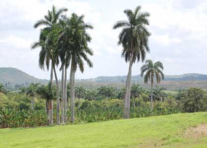 20101129133855-palmas.jpg