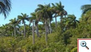 20110708133342-bosque3-167x96-abbf75ed32bc.jpg