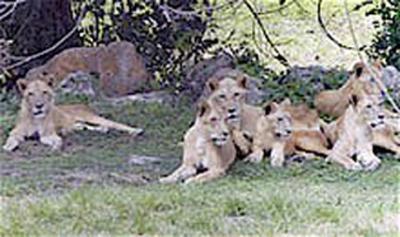20110830213411-parque-zoologico-30agos.jpg