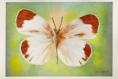 20110923122952-antonio-gerrero-mariposas-c.jpg