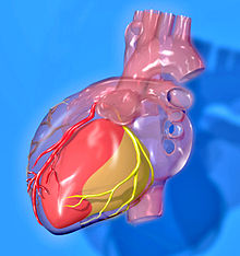 20111014082109-220px-heart-coronary-territories.jpg