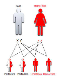 20120413125831-diagrama.jpg