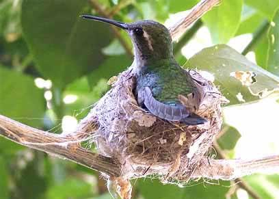 20120508201135-zunzun-aves-cuba.jpg
