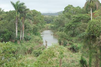 20120522102307-bosques.jpg