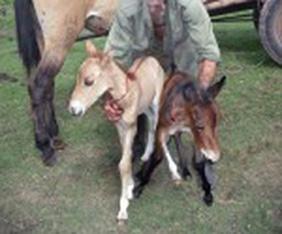 20120606132225-burro.jpg