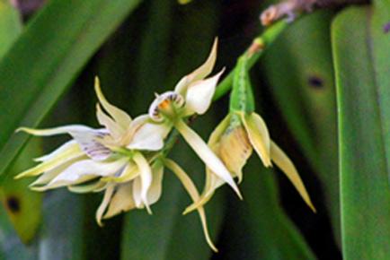 20120610122450-orquidea.jpg