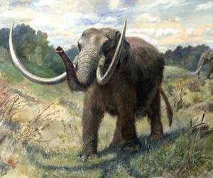 20120913122756-mamut.jpg