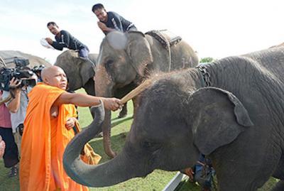 20120917121950-elefante.jpg