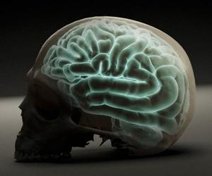 20120929011213-cerebro.png