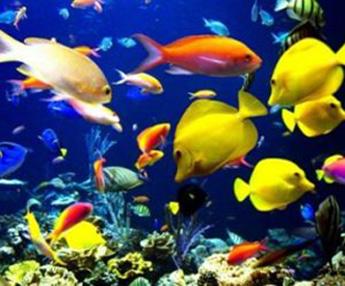 20121004133214-peces.jpg