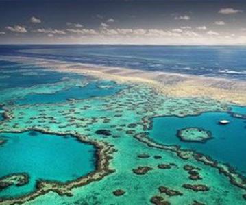 20121005122719-corales.jpg