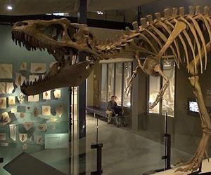 20131115155656-dinosaurio.jpg