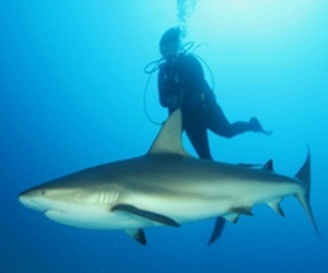 20151124132841-buzo-con-tiburon1.jpg
