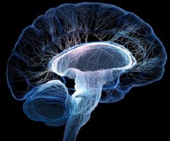 20160815132732-cerebro.jpg