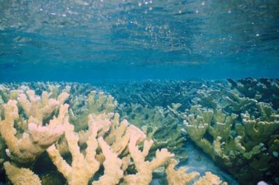 20170412135819-fig-1-cresta-del-arrecife-coralino-nirvana-golfo-de-cazones-cuba-foto-ken-w-580x385.png