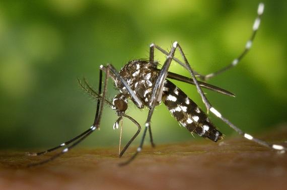 20170510222116-mosquito-tigre-1140x755.jpg