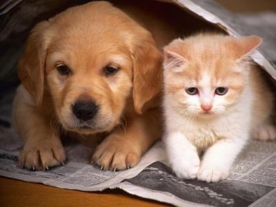 20170523133127-perros-y-gatos.jpg